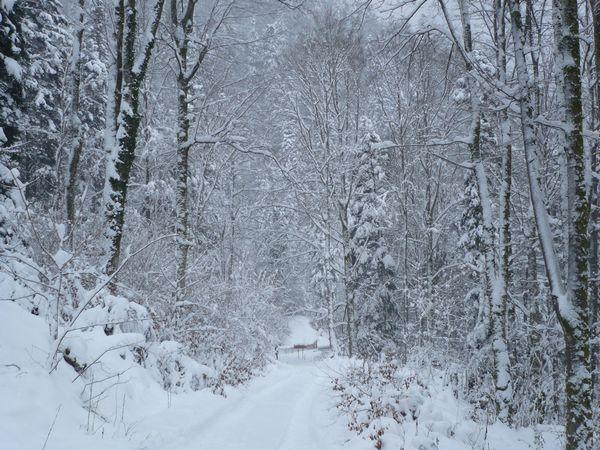Vers-Moosch-Chemin-de-Steingraben3.jpg