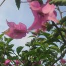 Dans mon jardin - Photo : Jeannette