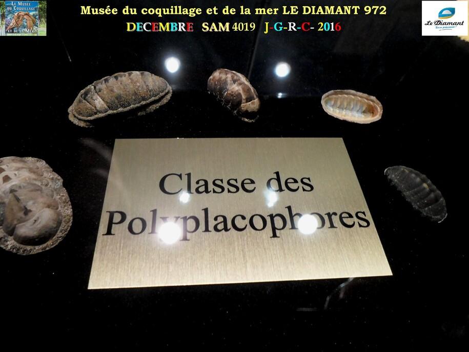 Le monde des coquillages de mer   1/5  1/    LE DIAMANT MARTINIQUE       D    31/03/2016