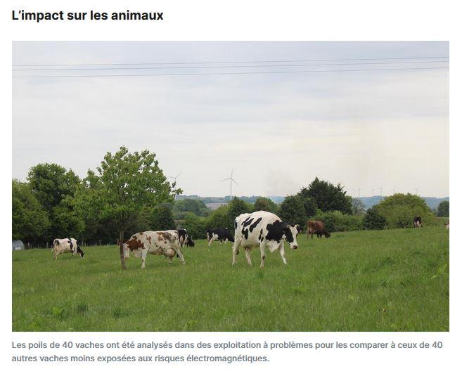 Le Courrier Indépendant >> Électromagnétisme : vers la preuve scientifique d'un danger pour l'homme et l'animal ?