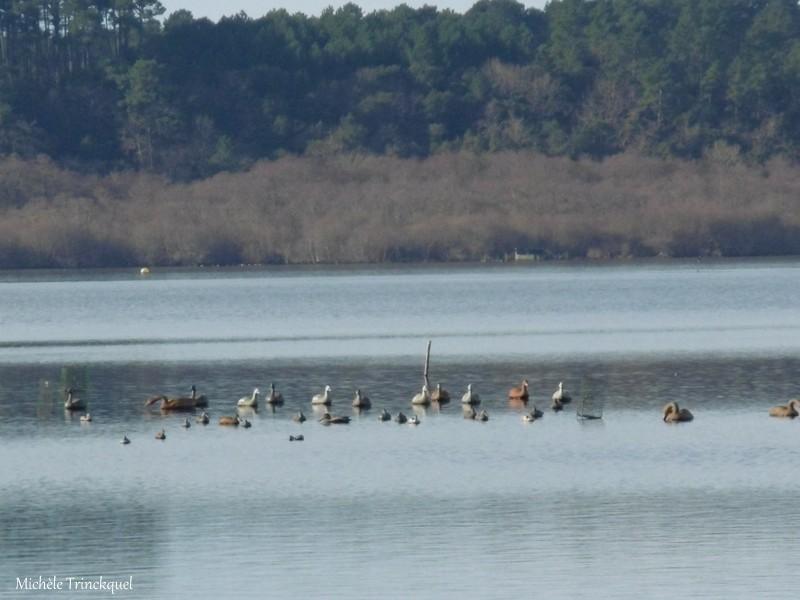"""Une nouvelle balade vers """"mon"""" Lac, le 13 janvier...."""