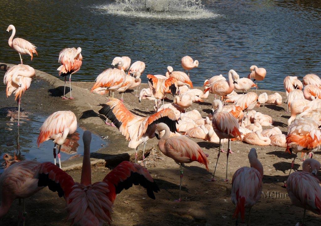 Les photos du périple de mes vacances en septembre 2012 - Les flamants roses (2)