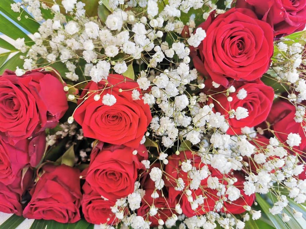 Les plantes à fleurs de la maison et les orchidées (2)..A suivre