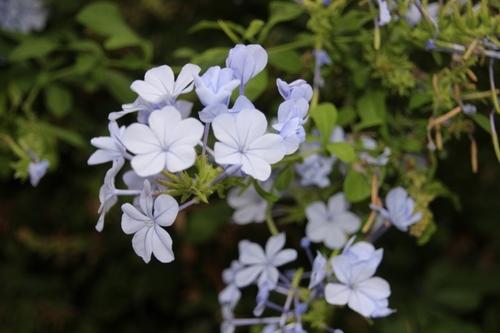 Fleurs de Grèce