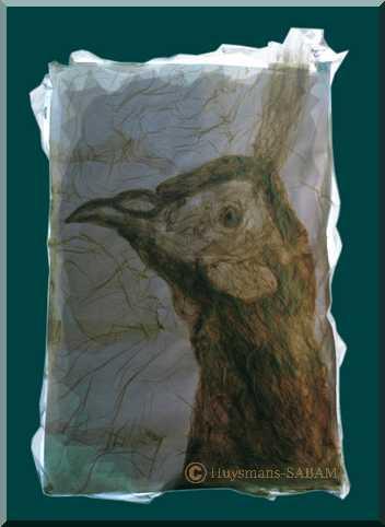 Dessin par collage: coq faisan, jeux de lumière et de transparence - Arts et sculpture: artiste peintre, sculpteur animalier