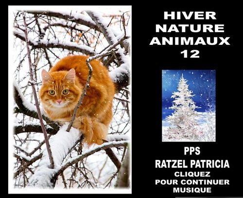 « HIVER NATURE ANIMAUX M 12.pps »