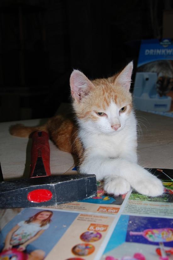 chaton25juilletm