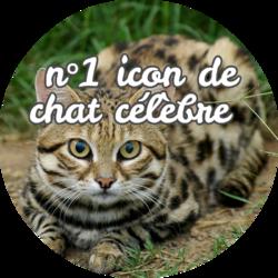 N°1 Icon de chat célèbre