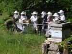 Devant la ruche