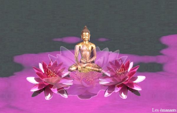 Une fleur fascinante biorespire g obiologie - Image fleur de lotus ...