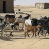 Mauritanie Au bord de la voie Ferrée Tmeimichat