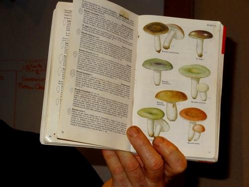 Une sortie de récolte et de détermination de champignons avec la Société Mycologique du Châtillonnais