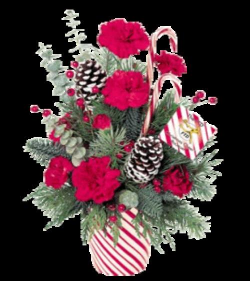 Fleurs de Noël en pot ou vase etc