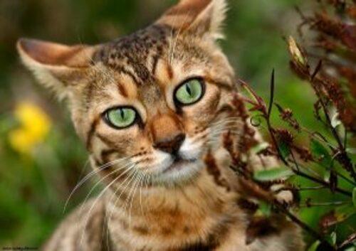 Dix infos utiles sur les chats