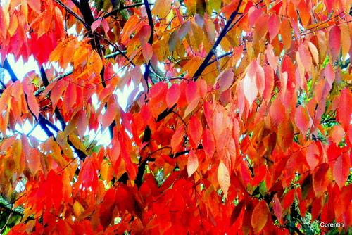 Les feuilles en automne ...