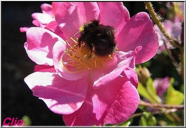 Etats unis : Monsanto saisit et détruit illégalement des abeilles reines résistantes au Roundup.