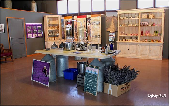 Visite d'une distillerie de lavande