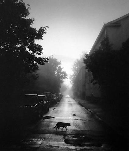 07 - Des chats dans la rue suite