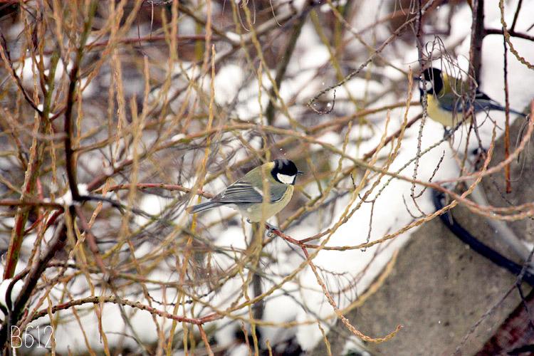 - Les oiseaux du jardin -