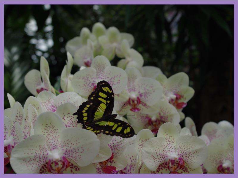 Parc des Papillons 68150 Hanuwihr