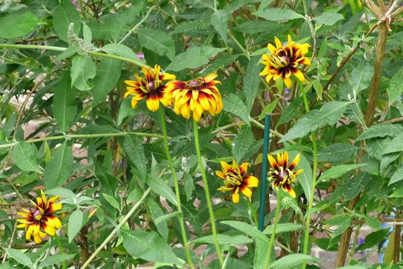 Des fleurs et des plumes