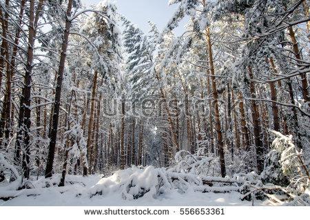taîga de neige