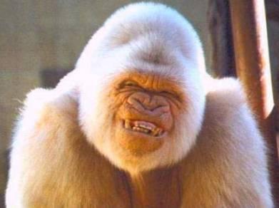 Sourire de singe