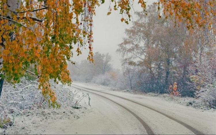 Images du monde : Oiseaux en hiver