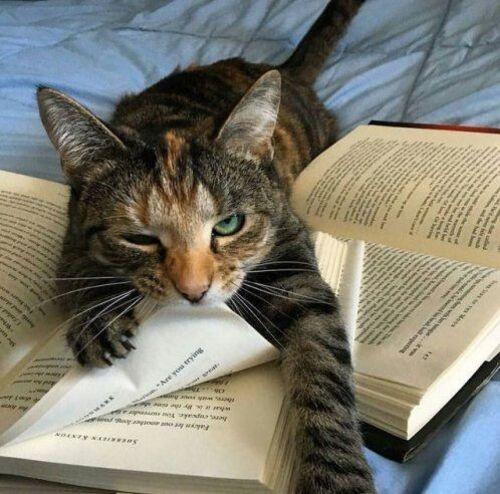09 - Des chats et des livres encore