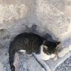 des chats un peu partout ♡