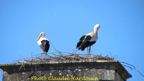 Encore quelques belles photos des cigognes  châtillonnaises, qui sont parties pour d'autres cieux...