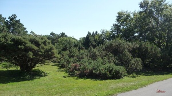Jardin-botanique--4-.JPG