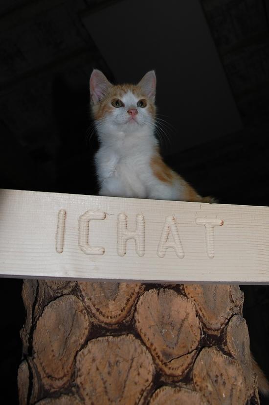 chaton11juilletc