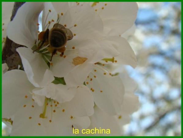 abeille-2013--2-.JPG