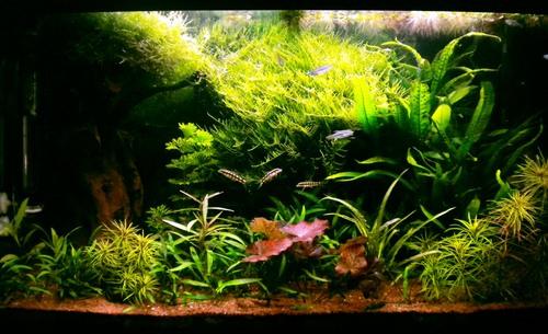ASIE-aquarium