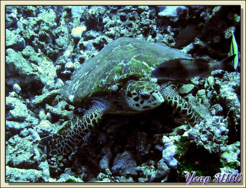 Images de Polynésie (2010) transférées depuis mon ancien blog