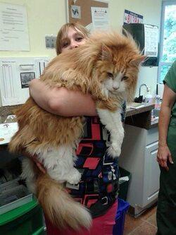 Des gros chats !