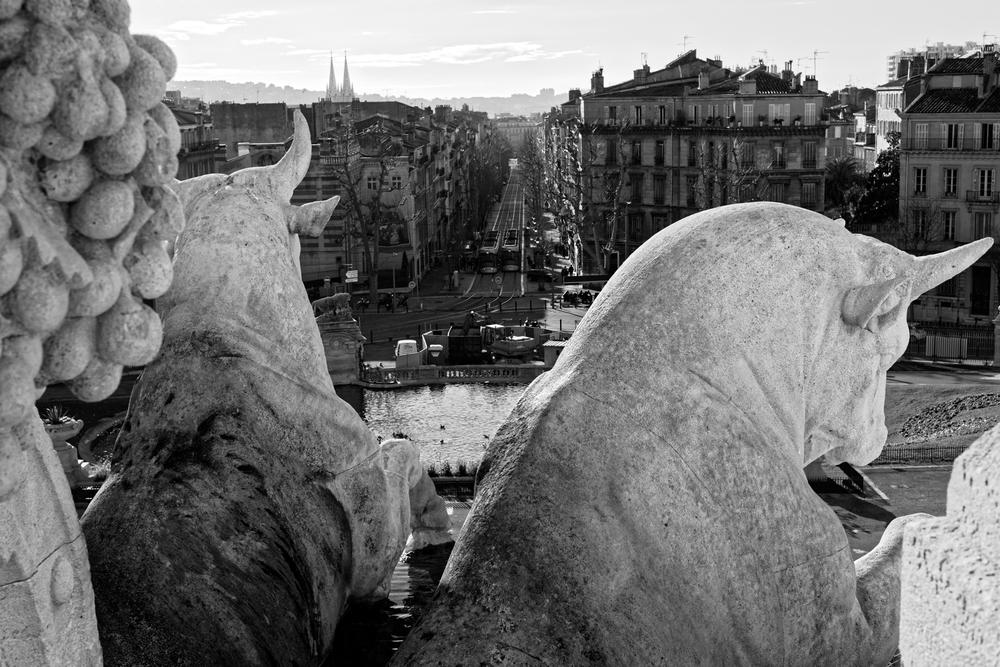 Des Rhinocéros au parc Longchamp