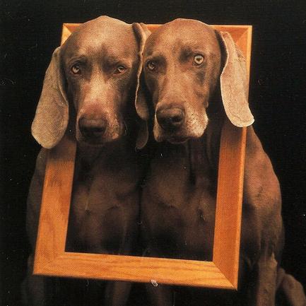Portraits en double-petites bêtes