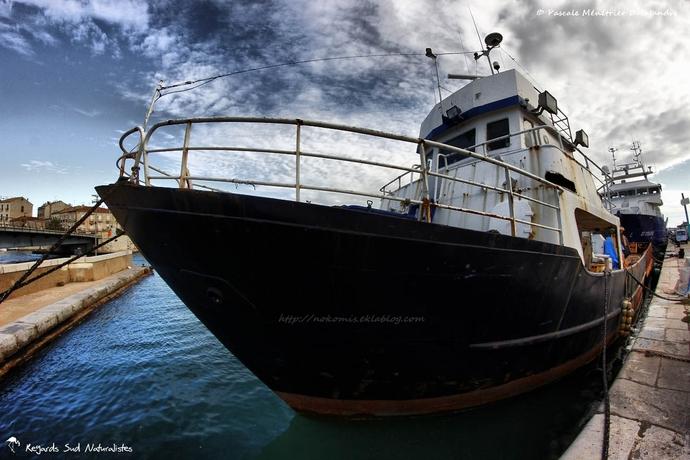 Sur le port de Sète...