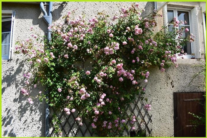 'Blossomtime'