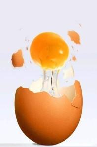 oeuf-omelette.jpg
