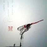 libellule (Sympétrum rouge)