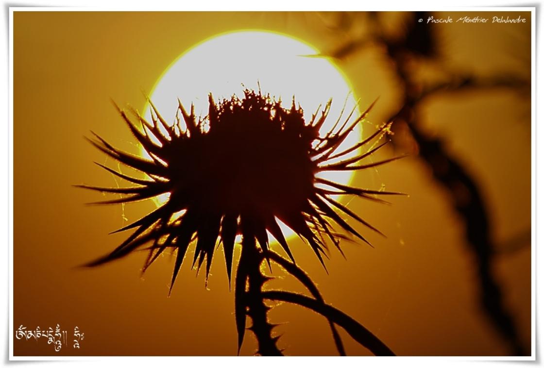 Couché de soleil sur Chardons fanés...