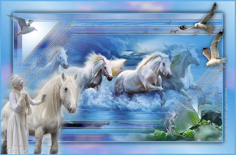 *** White Horses ***