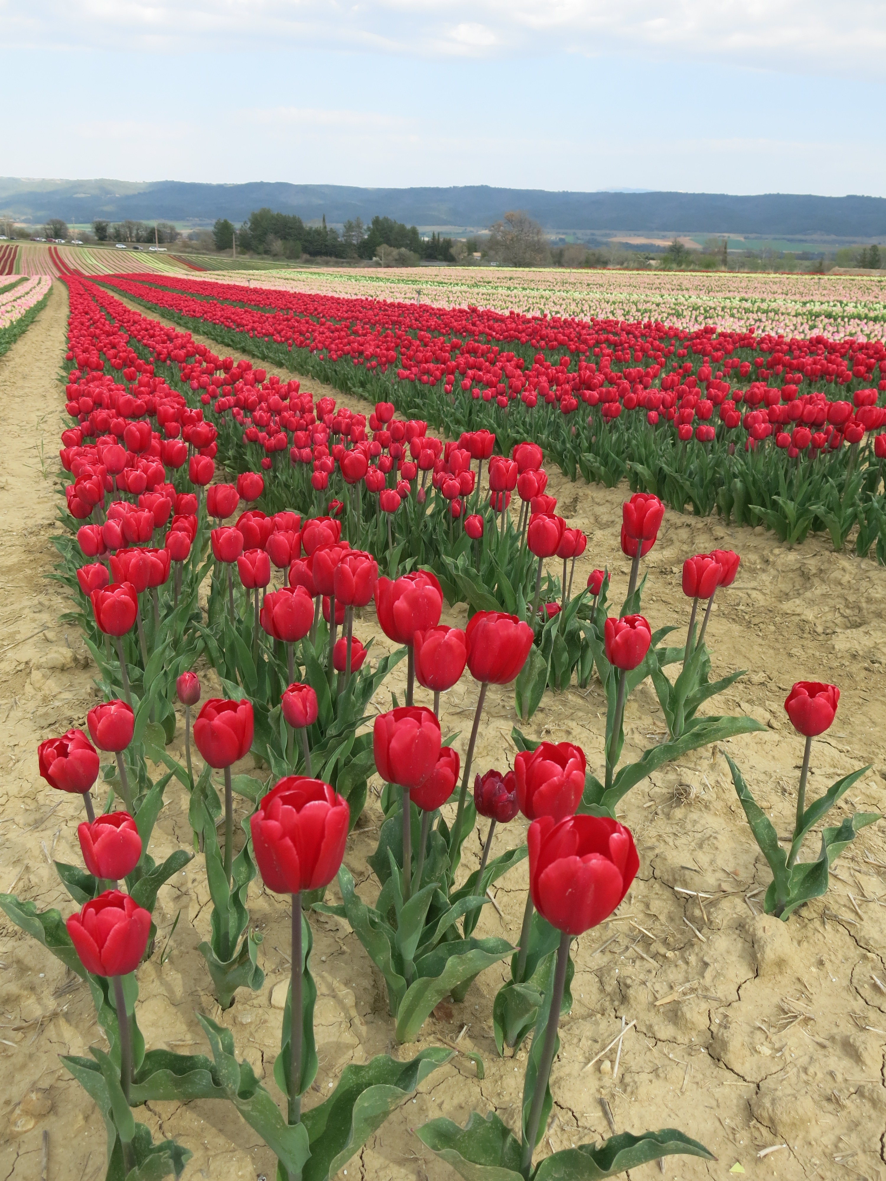 route tulipes hollande