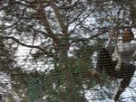 Sortie dans les arbres - 23 avril 2013