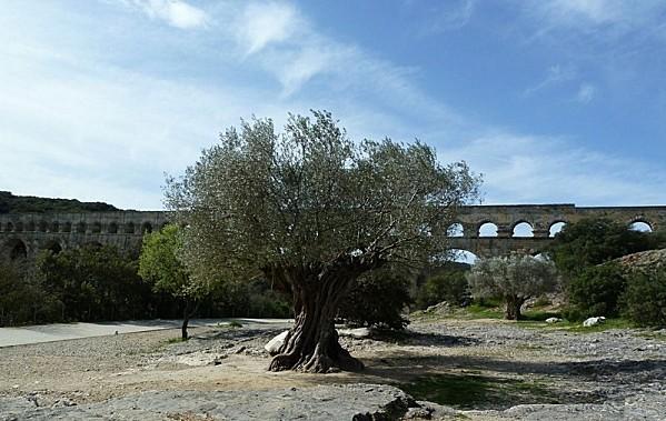 60 Pont du Gard (16)