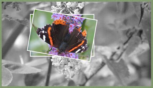 Zone de couleur sur photo  noir et blanc