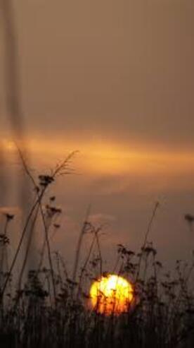 Images Gratuites : la nature, horizon, branche, nuage, ciel, Soleil, lever  du soleil, le coucher du soleil, brouillard, lumière du soleil, Matin,  Aube, crépuscule, soir, réflexion, ambiance, tôt le matin, Phénomène  atmosphérique